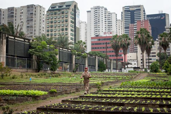 Urban Farms is now a necessity